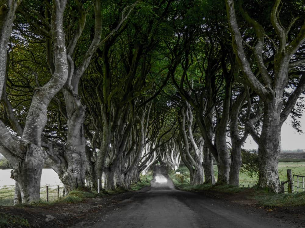 dark hedges hiking in Irealnd