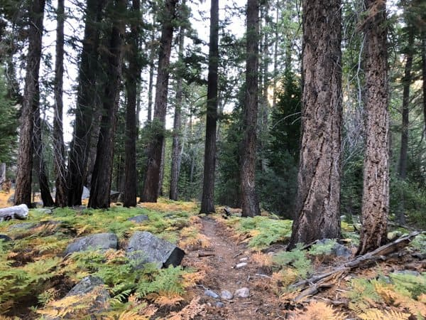 high sierra trail campground
